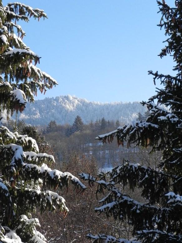 A white Xmas 2010