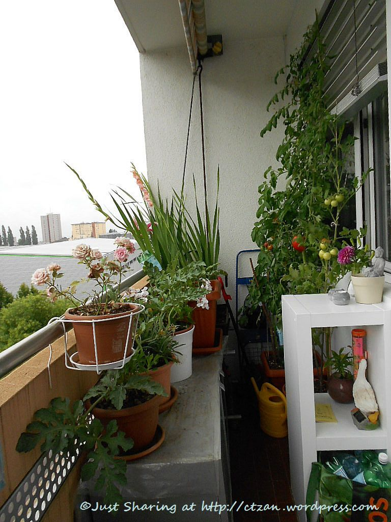 Yen can cook and garden too just sharing for Balcony vegetable garden