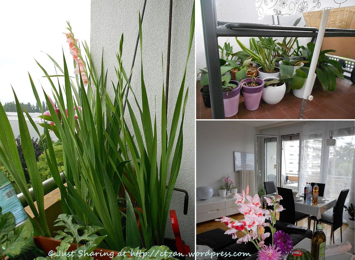Yen can cook and garden too just sharing for Best flowers for apartment balcony