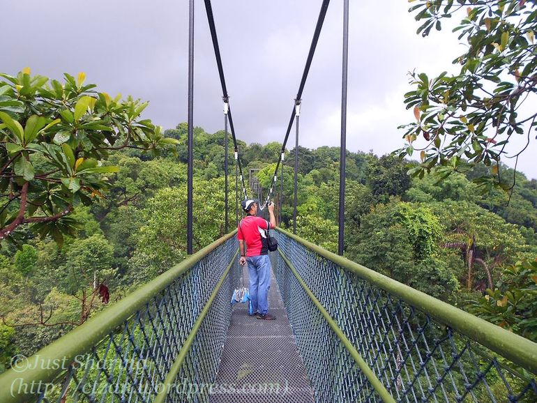 The ... & Singapore holiday: a wet excursion to the TreeTop Walk u2026 | Just ...