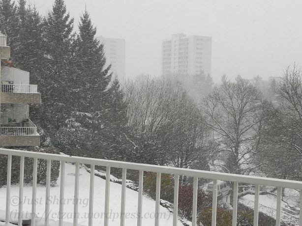 Another snowy morning, Lausanne-Vennes 7 December 2012