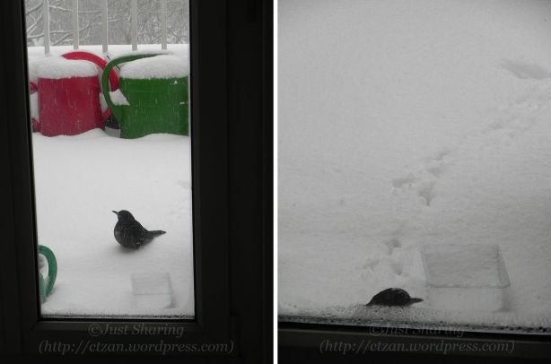 Our winter visitor, 7 December 2012