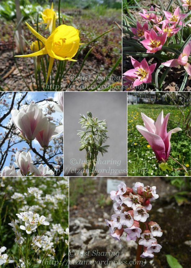 Flowers.2