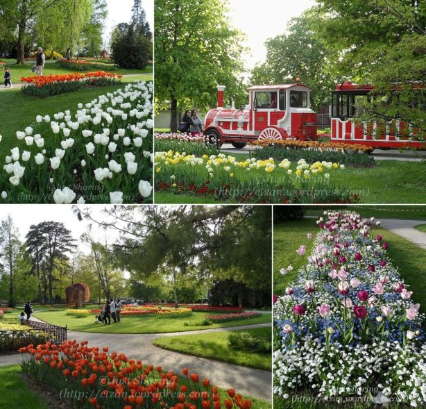 Tulip Festival Panorama.2