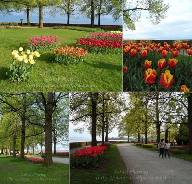 Tulip Festival Panorama 3