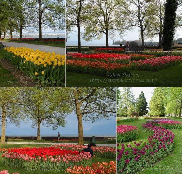 Tulip Festival Panorama 4