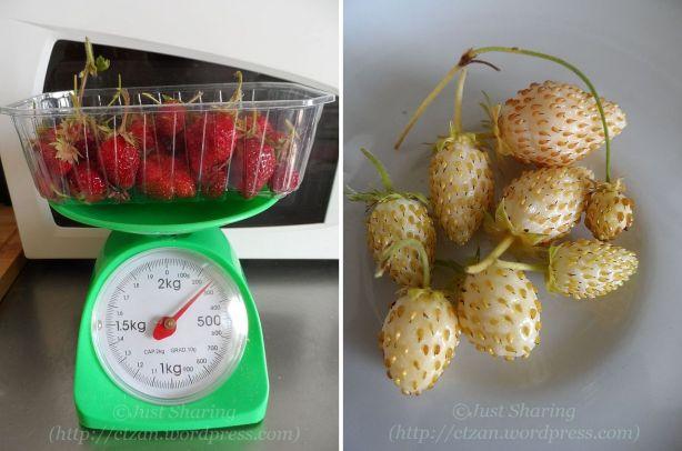 Strawberries harvest