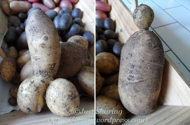 Odd shape potatoes