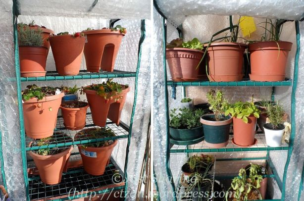Greenhouse shelves