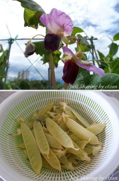 Golden sweet peas